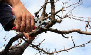 tree-trimming-pruning-sl