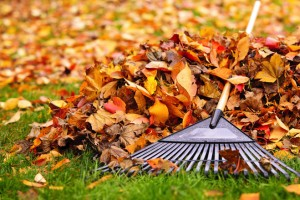 Prep Your Yard For Winter