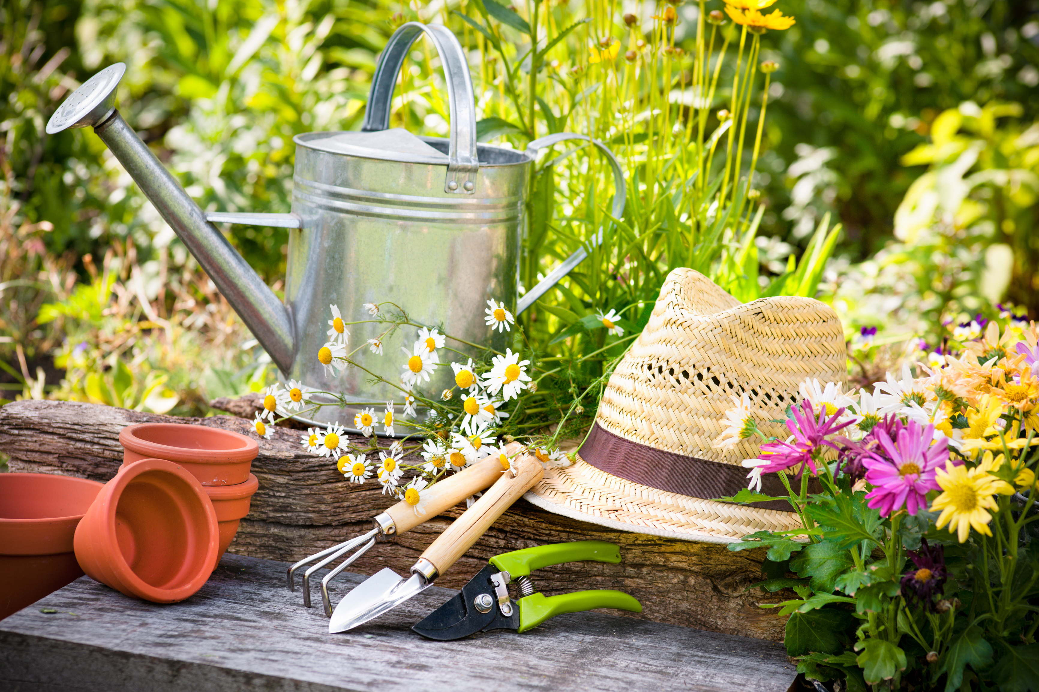 5 Tips To Prepare Your Garden For Spring Aronica Plant Health Care